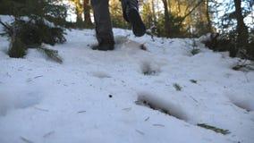 Pés do homem irreconhecível que andam na floresta da montanha da neve na manhã Caminhante novo que escala na inclinação nevado no filme