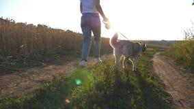 Pés do proprietário fêmea que movimentam-se com seu cão do cão de puxar trenós siberian ao longo do trajeto perto do prado no por vídeos de arquivo