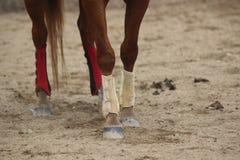 Pés dos cavalos Imagem de Stock Royalty Free