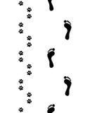 Pés e patas do cão Foto de Stock