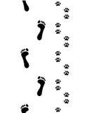 Pés e patas do cão Imagens de Stock