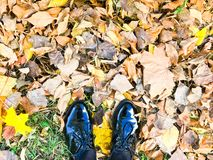 Pés em sapatas lustrosas lisas de couro pretas bonitas em amarelas e no vermelho, folhas de outono naturais de cor castanha fotografia de stock