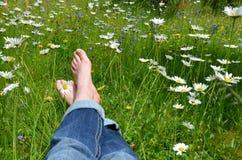 Pés em um prado da flor Fotos de Stock Royalty Free