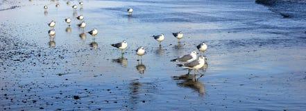 Pés frios na praia Fotos de Stock Royalty Free