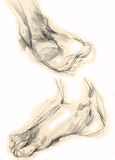 Pés humanos - desenho ilustração do vetor
