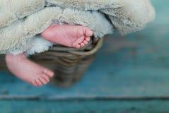 Pés minúsculos recém-nascidos Imagem de Stock Royalty Free
