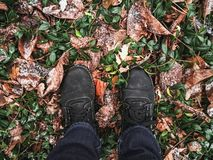 Pés nas botas, folhas caídas na floresta foto de stock