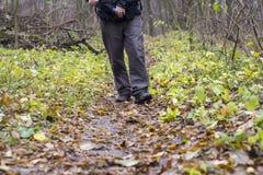 Pés nas sapatas em um trajeto de floresta Foto de Stock