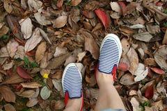 Pés nas sapatilhas nas folhas caídas Foto de Stock Royalty Free