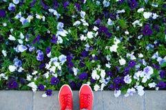 Pés nas sapatilhas vermelhas ao lado dos botões de florescência das flores imagens de stock royalty free