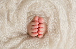 Pés recém-nascidos do bebê Imagens de Stock Royalty Free