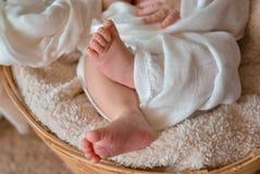 Pés recém-nascidos do bebê Fotografia de Stock Royalty Free