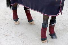 Pés saudáveis do cavalo de um cavalo da ligação em ponte da mostra foto de stock