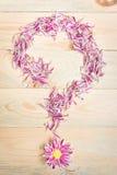 A pétala cor-de-rosa da flor arranja no fundo de madeira como uma pergunta março Fotos de Stock