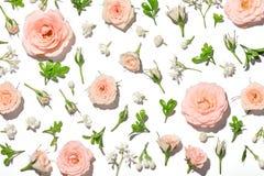 Pétala de Rosa cor-de-rosa foto de stock royalty free