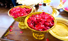 Pétala de rosas Imagem de Stock Royalty Free