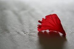 Pétala vermelha da flor fotografia de stock