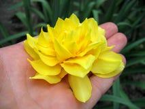 Pétalas amarelas foto de stock