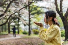 Pétalas bonitas da flor da cereja do sopro da moça de suas mãos Fotografia de Stock