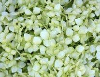 Pétalas brancas consideravelmente pequenas Foto de Stock Royalty Free