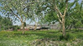 Pétalas brancas lentamente de queda em florescer árvores de Apple na mola no jardim Hd vídeos de arquivo