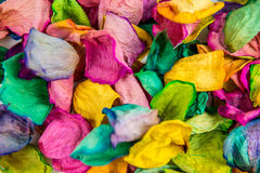 pétalas cor-de-rosa Imagem de Stock