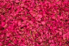 Pétalas cor-de-rosa Fotos de Stock