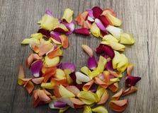 pétalas cor-de-rosa Imagem de Stock Royalty Free