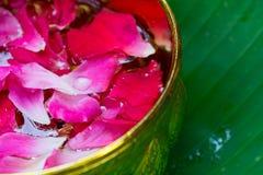 Pétalas cor-de-rosa cor-de-rosa na bacia dourada com fundo verde da folha imagem de stock royalty free