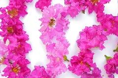Pétalas cor-de-rosa no fundo branco Imagens de Stock