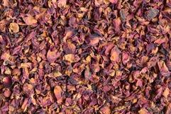 Pétalas cor-de-rosa secadas Foto de Stock Royalty Free