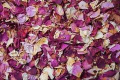 Pétalas cor-de-rosa secadas nas máscaras do vermelho e do rosa Imagem de Stock
