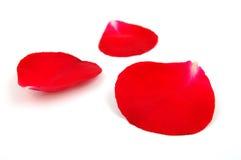 Pétalas cor-de-rosa vermelhas Foto de Stock