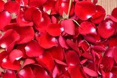 Pétalas cor-de-rosa vermelhas imagens de stock