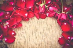 Pétalas cor-de-rosa vermelhas fotos de stock royalty free