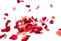 Pétalas cor-de-rosa vermelhas isoladas Imagem de Stock Royalty Free