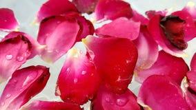 Pétalas cor-de-rosa vermelhas na água foto de stock