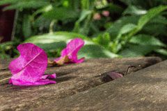 Pétalas da flor imagem de stock