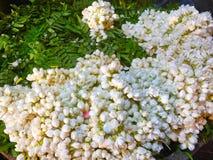 Pétalas da flor branca em uma cesta Imagens de Stock Royalty Free