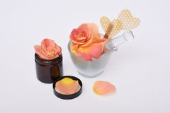 Pétalas da flor de Rosa isoladas no branco Foto de Stock Royalty Free