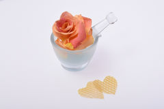 Pétalas da flor de Rosa isoladas no branco Fotos de Stock