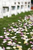 Pétalas da flor do casamento Fotografia de Stock