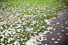 Pétalas da flor na grama verde Fotografia de Stock Royalty Free