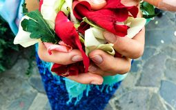 Pétalas da flor nas mãos imagem de stock