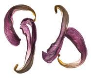 Pétalas da tulipa/alta resolução Imagens de Stock