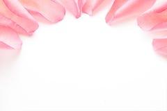 Pétalas de Rosa Foto de Stock Royalty Free