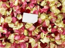 Pétalas de Rosa Fotografia de Stock Royalty Free