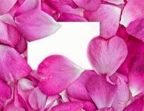 Pétalas de Rosa com cartão Foto de Stock Royalty Free