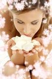 Pétalas de Rosa com flores pequenas Fotos de Stock