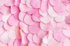 Pétalas de Rosa cor-de-rosa 01 Imagens de Stock
